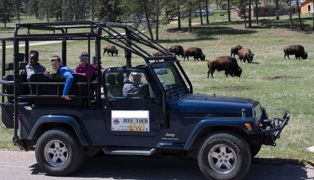 Jeep -- Buffalo Safari - BLACK HILLS OPEN-TOP-TOURS