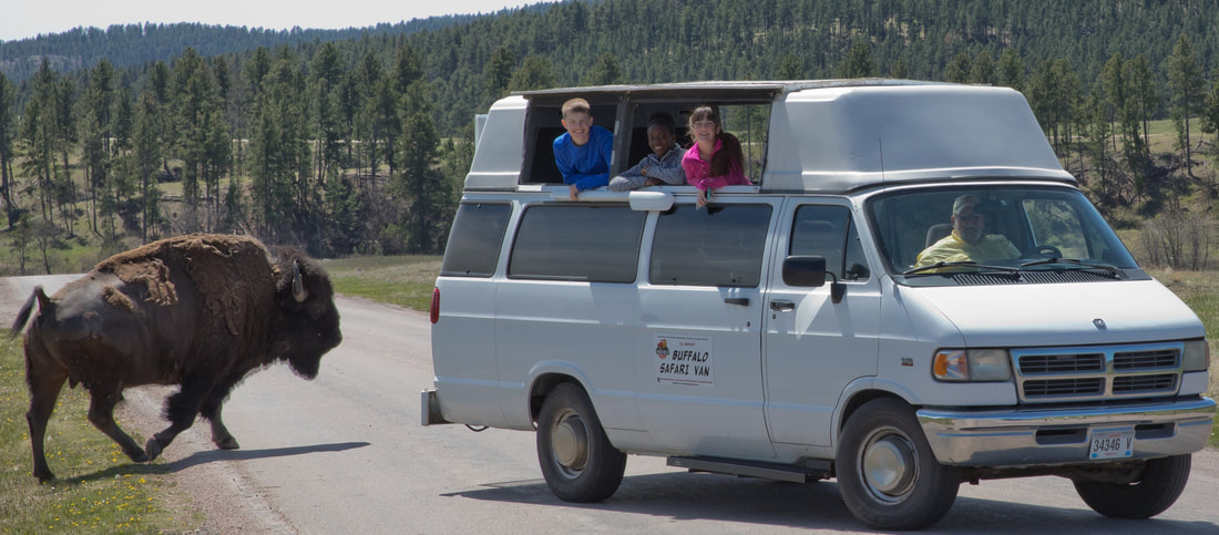 Van - Buffalo Safari - BLACK HILLS OPEN-TOP-TOURS